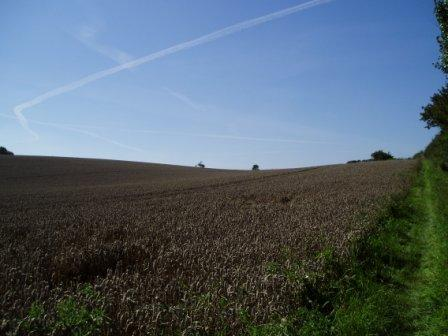Field Between Mendham and Harleston with harvested crop